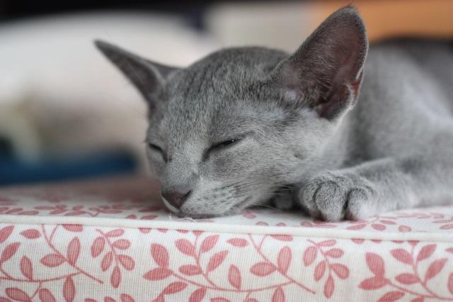 奈々の椅子の上眠りかけ2