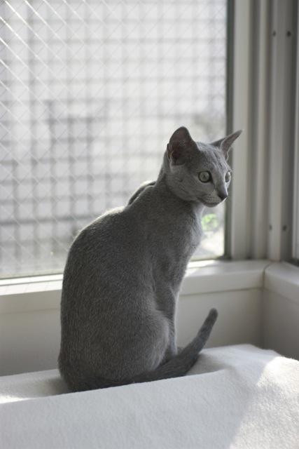窓際お座り