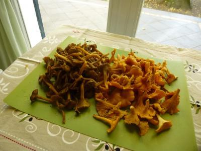 パリの秋 きのこたちと思い出のサヴォワからのお皿