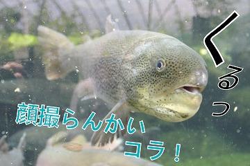 s-takumi2141001-222