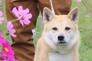 s-kosumosu141006-IMG_4229