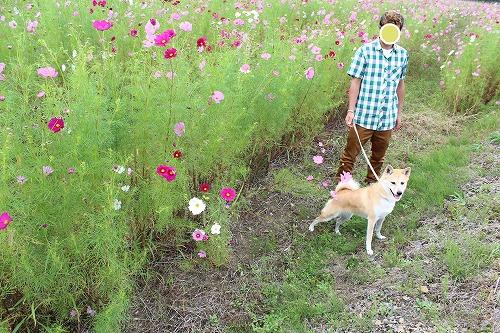 s-kosumosu141005-IMG_4204