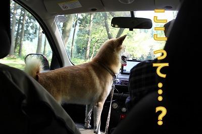 s-jyumoku141011-IMG_4058