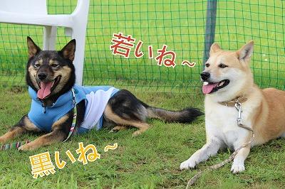 s-kuroshiba141020-IMG_3429