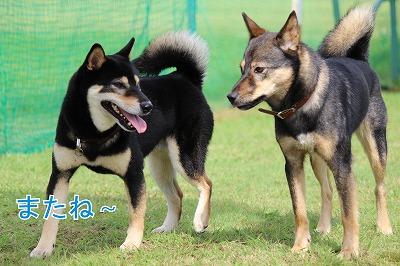 s-kuroshiba141020-IMG_3477