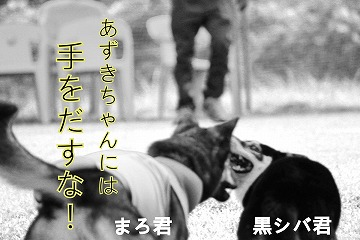 s-kuroshiba141021-IMG_3449