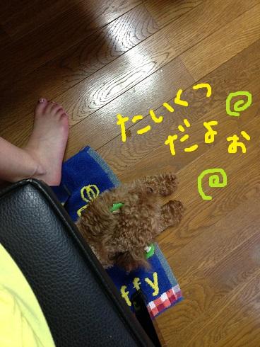 IMG_1685_201311220247435f5.jpg
