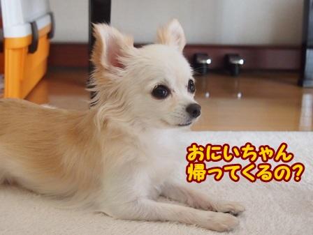 blog4569a.jpg
