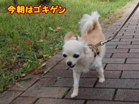 blog4610a.jpg