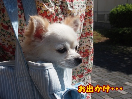 blog4617a.jpg