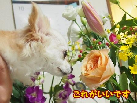blog4668a.jpg