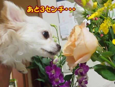 blog4669a.jpg