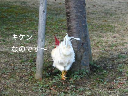ni-176_201402092111165ec.jpg
