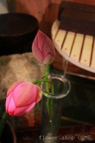 お盆の花 蓮
