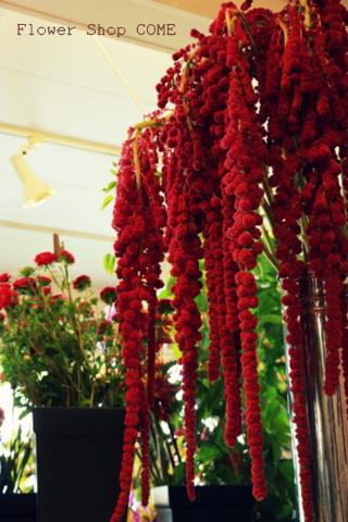 秋の花 アマランサス
