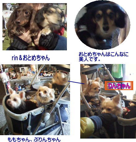 2013111921370297e.jpg