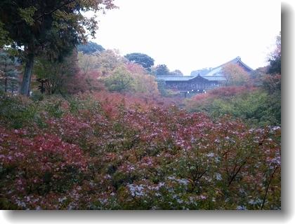 tofukuji1311_01.jpg
