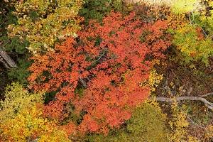 2013nakatugawa5-web300.jpg