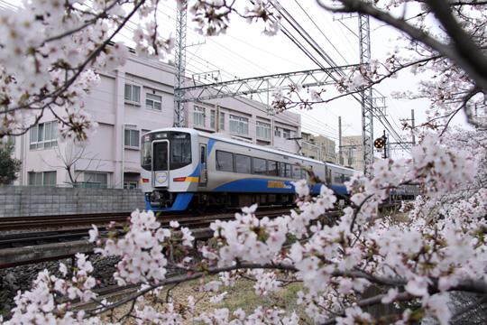 20130331_hanadera-04.jpg