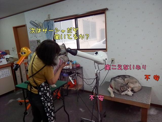 7_s.jpg