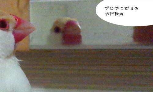 かっこわりぃ_2