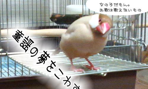小鳥の歌_1