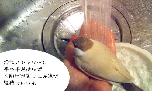 手浴びの季節_1
