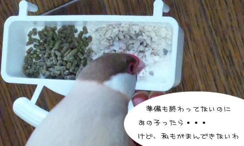 腹減り減り腹_5