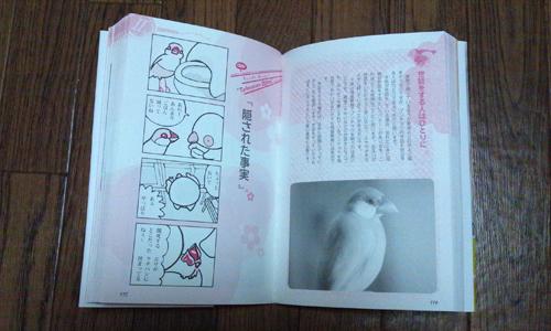 文鳥生活_2