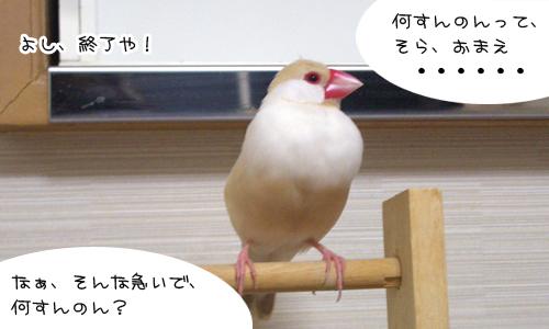いらち_5