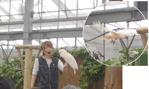 神戸花鳥園_1