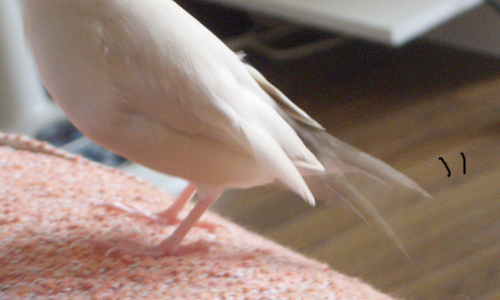 羽の重なり順_3