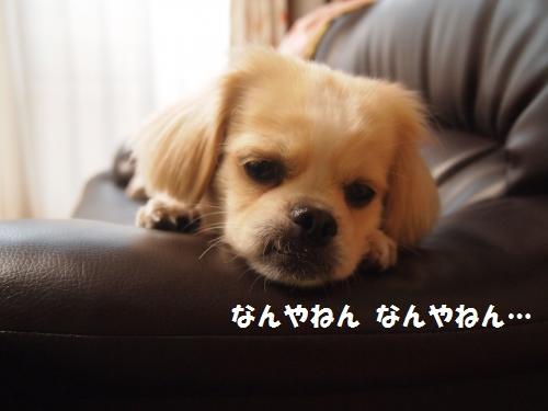 001_convert_20130808221318.jpg