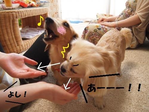 002_convert_20130818140041.jpg