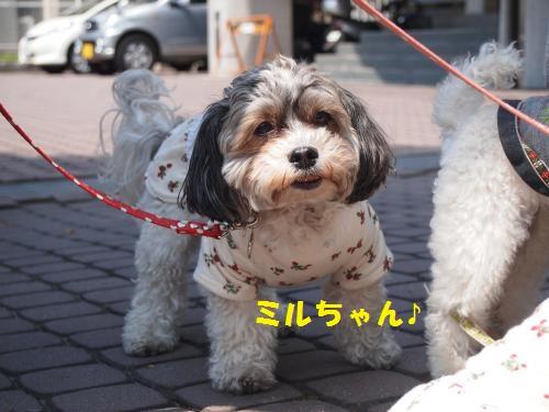 003_convert_20130413224301.jpg