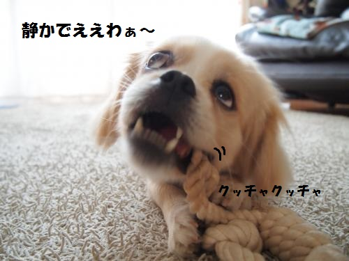 003_convert_20130812210023.jpg