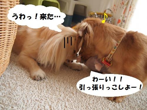 004_convert_20130703221459.jpg