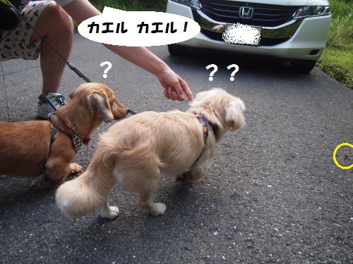 004_convert_20130725163122.jpg