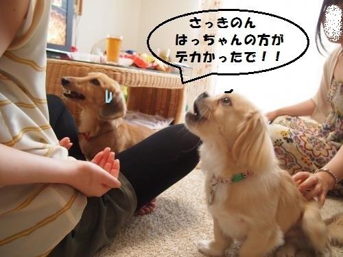 004_convert_20130818140109.jpg