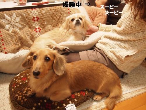 004_convert_20131124214242.jpg