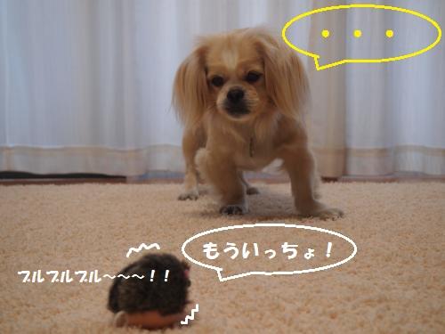 005_convert_20130524161017.jpg