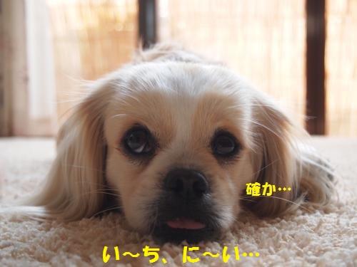 006_convert_20130515145730.jpg
