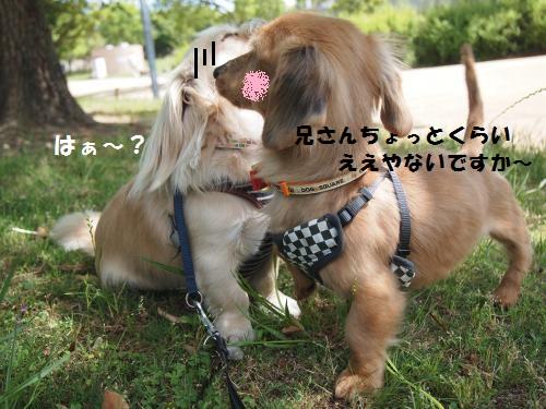 006_convert_20130531222817.jpg