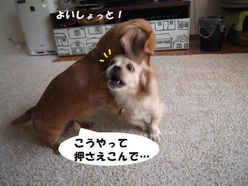 008_convert_20130905152630.jpg