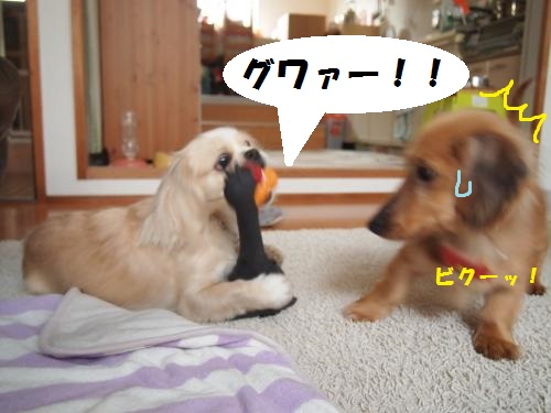 010_convert_20130607223747.jpg