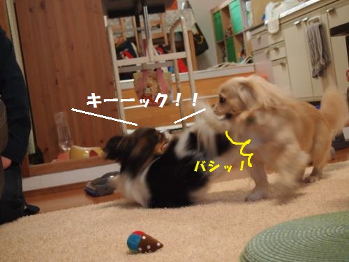 011_convert_20130502204137.jpg