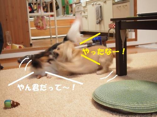 013_convert_20130502204224.jpg