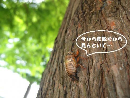013_convert_20130718141001.jpg