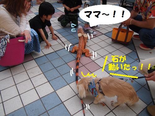 015_convert_20130510173239.jpg