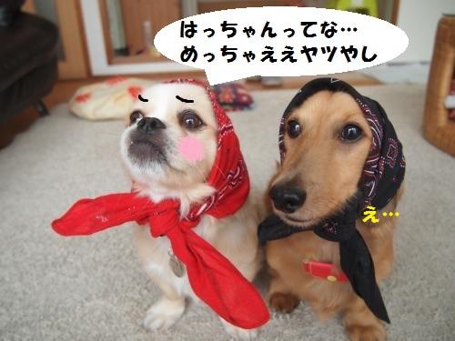 022_convert_20130807145322.jpg